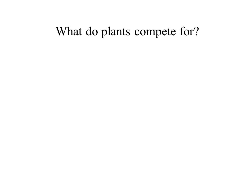 What do plants compete for