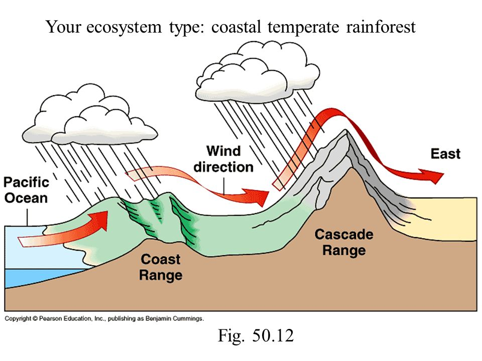Your ecosystem type: coastal temperate rainforest