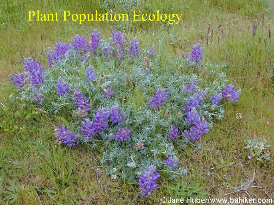 Plant Population Ecology