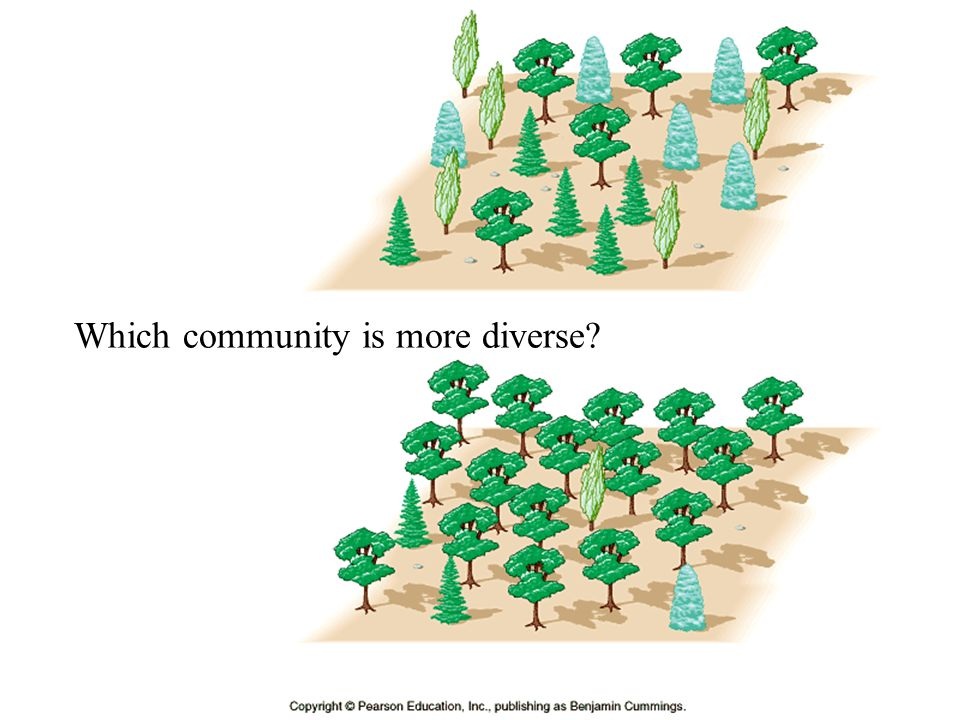 Which community is more diverse