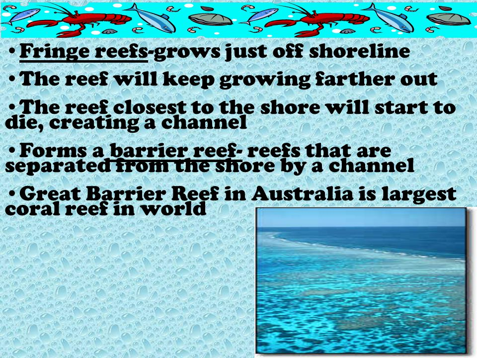 Fringe reefs-grows just off shoreline