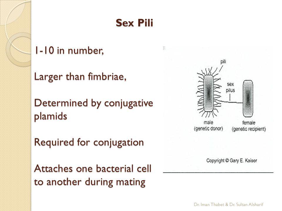 Sex Pili