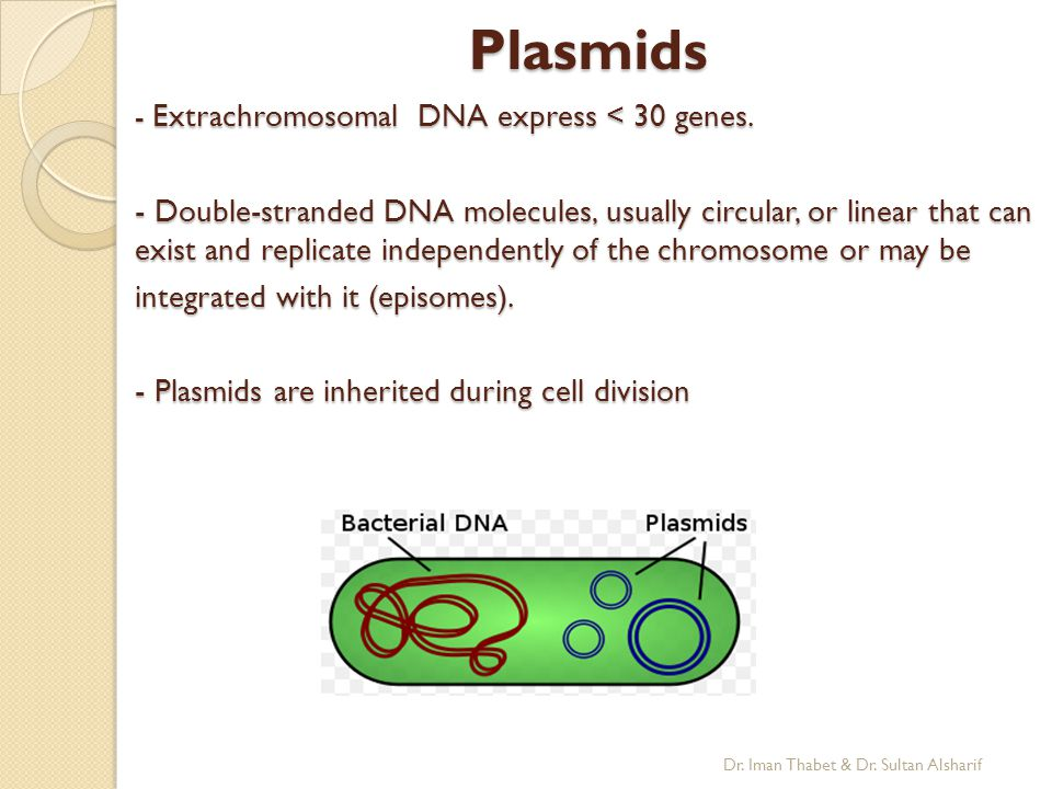 Plasmids - Extrachromosomal DNA express < 30 genes.
