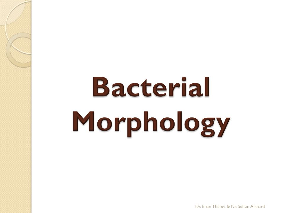 Bacterial Morphology Dr. Iman Thabet & Dr. Sultan Alsharif