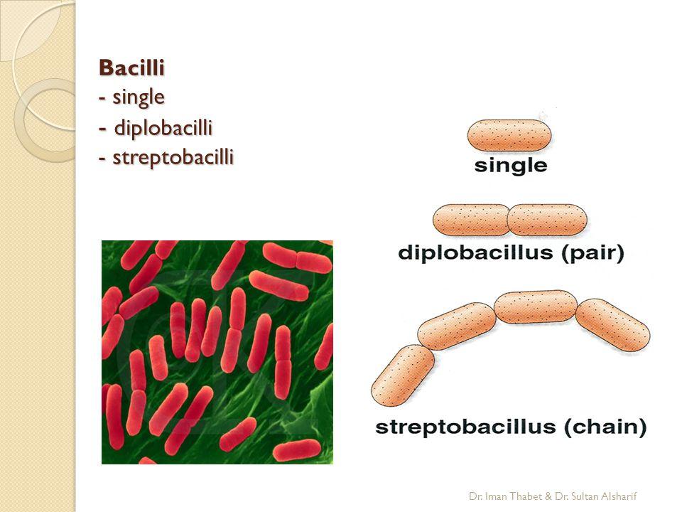 Bacilli - single - diplobacilli - streptobacilli