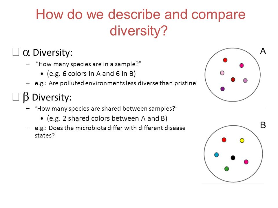 How do we describe and compare diversity