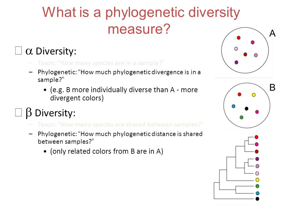 What is a phylogenetic diversity measure