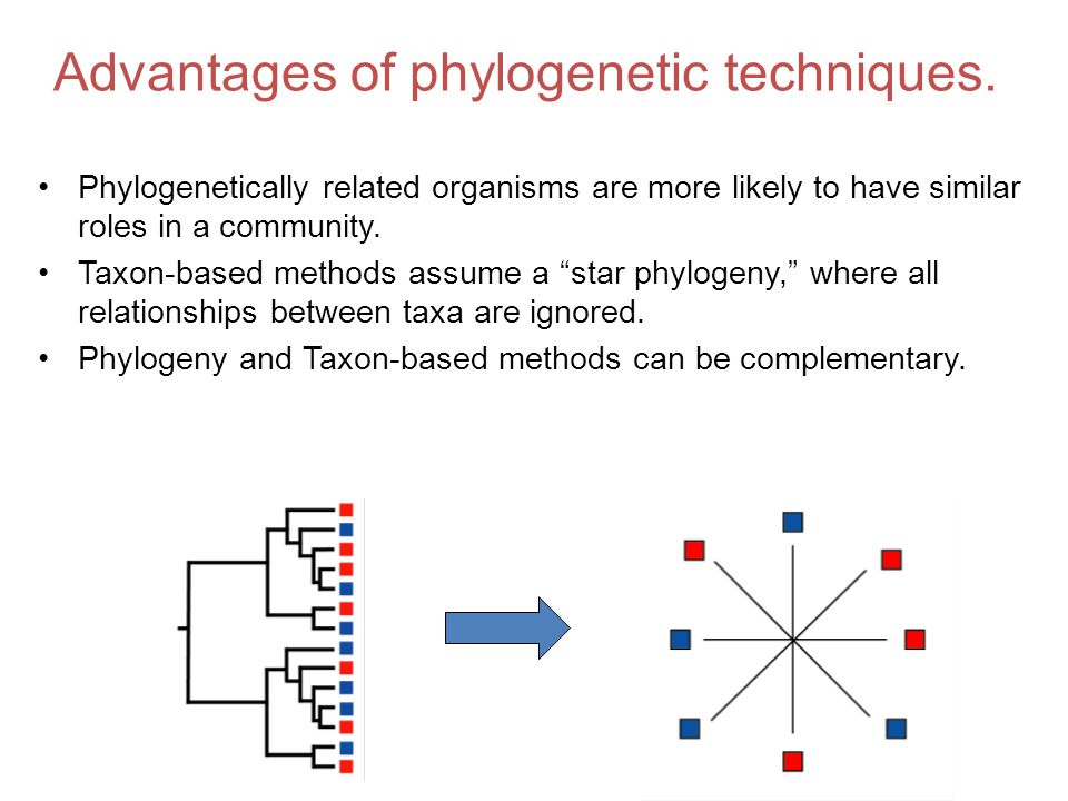 Advantages of phylogenetic techniques.