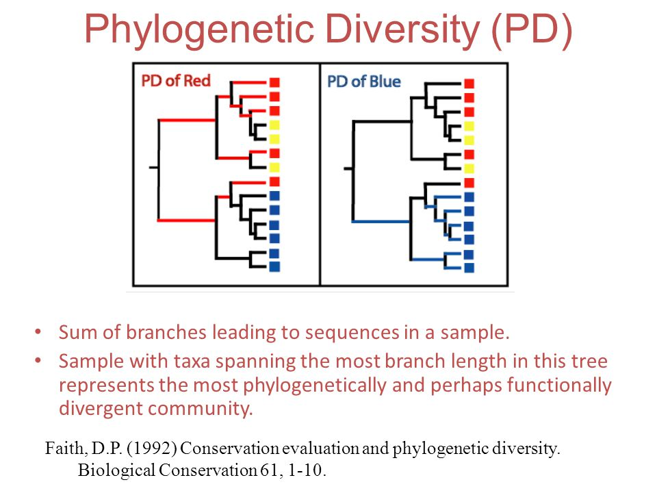 Phylogenetic Diversity (PD)