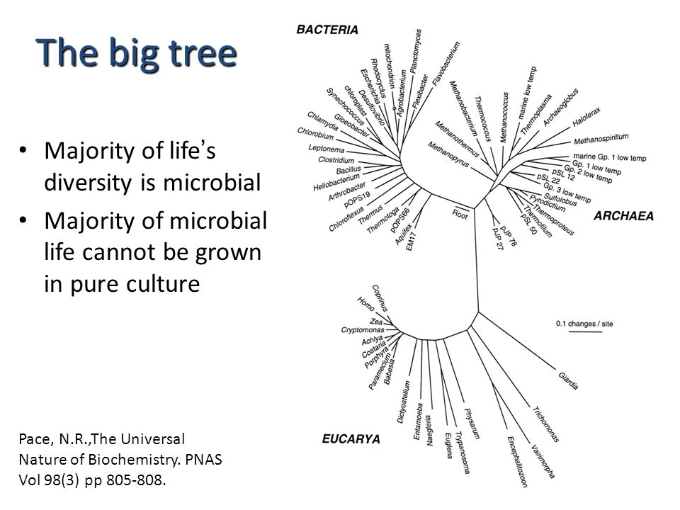 The big tree Majority of life's diversity is microbial