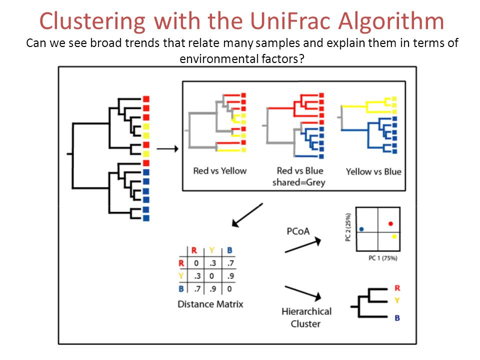 Clustering with the UniFrac Algorithm