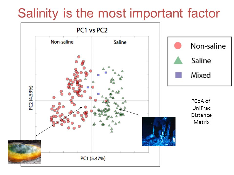 Salinity is the most important factor