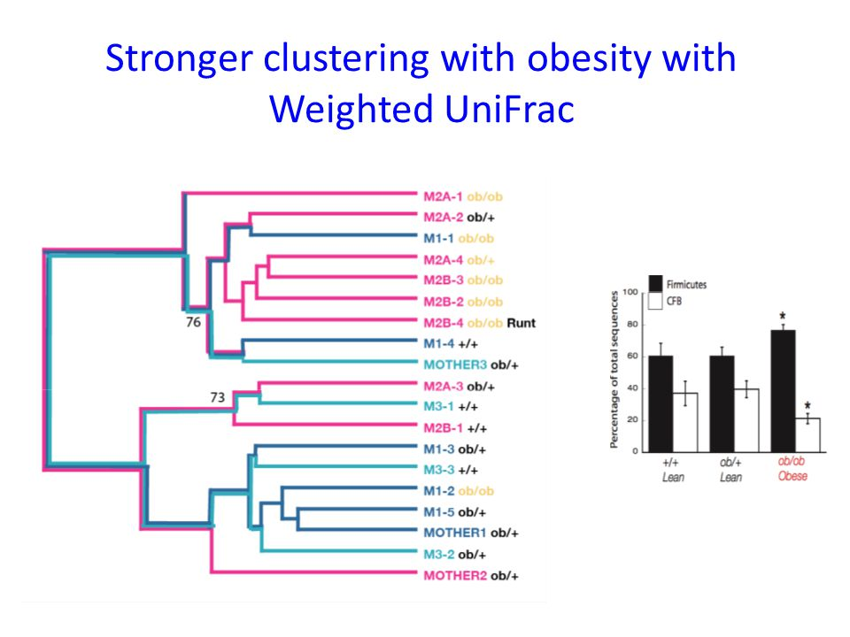 Stronger clustering with obesity with Weighted UniFrac