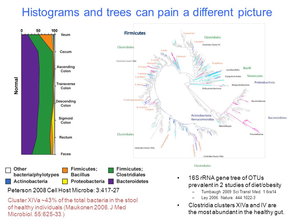 Histograms and trees can pain a different picture