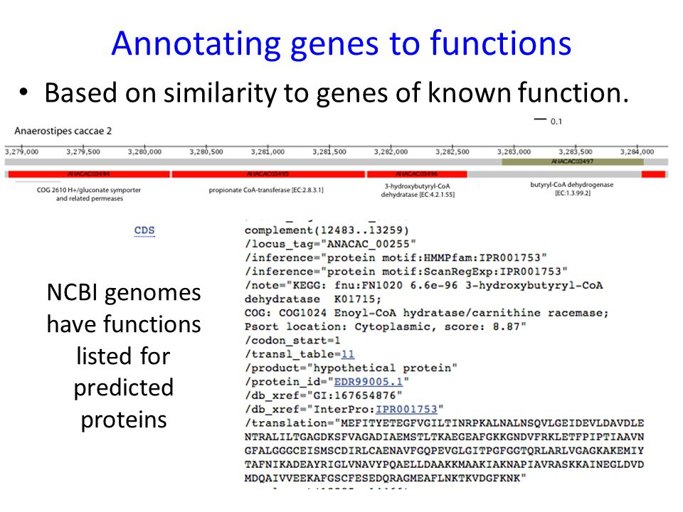 Annotating genes to functions