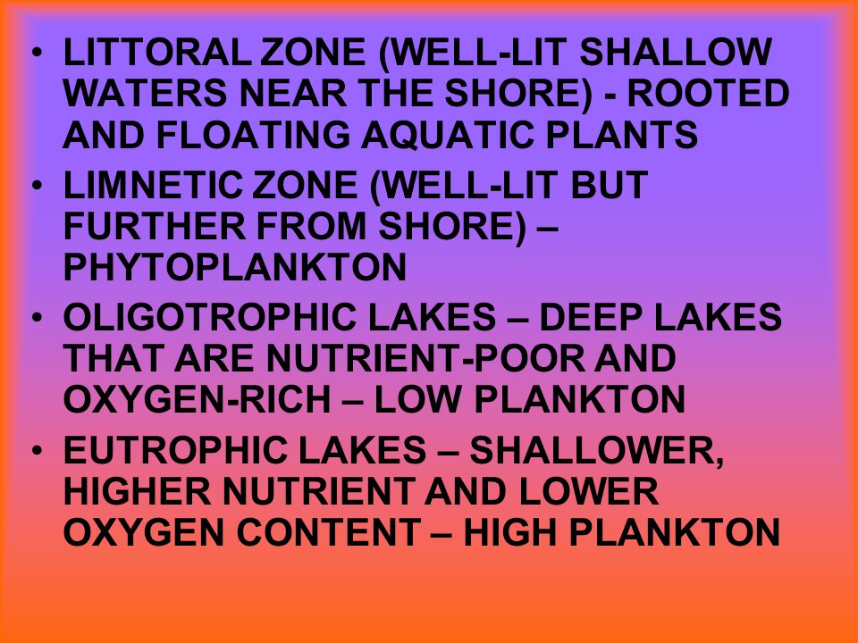 LITTORAL ZONE (WELL-LIT SHALLOW WATERS NEAR THE SHORE) - ROOTED AND FLOATING AQUATIC PLANTS
