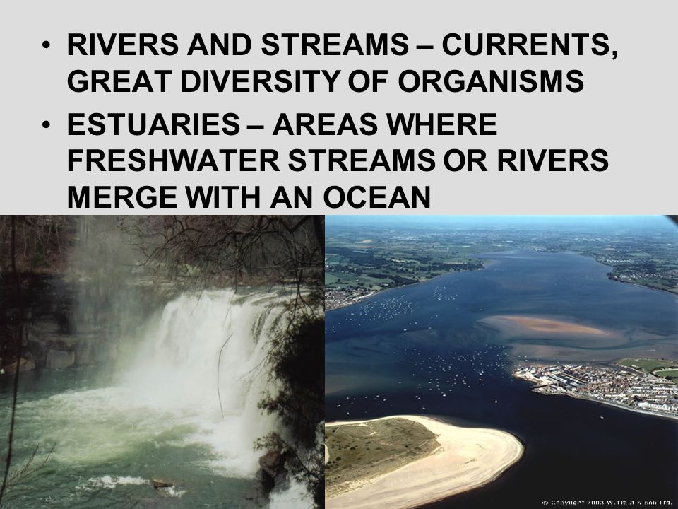 RIVERS AND STREAMS – CURRENTS, GREAT DIVERSITY OF ORGANISMS