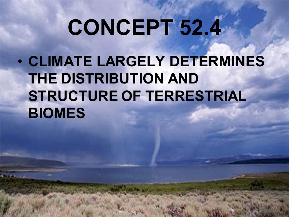 CONCEPT 52.4 CLIMATE LARGELY DETERMINES THE DISTRIBUTION AND STRUCTURE OF TERRESTRIAL BIOMES