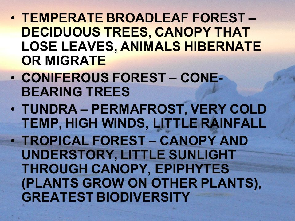TEMPERATE BROADLEAF FOREST – DECIDUOUS TREES, CANOPY THAT LOSE LEAVES, ANIMALS HIBERNATE OR MIGRATE