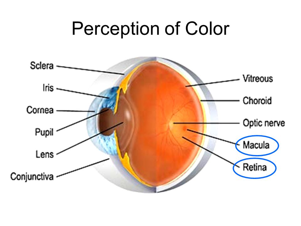 Perception of Color