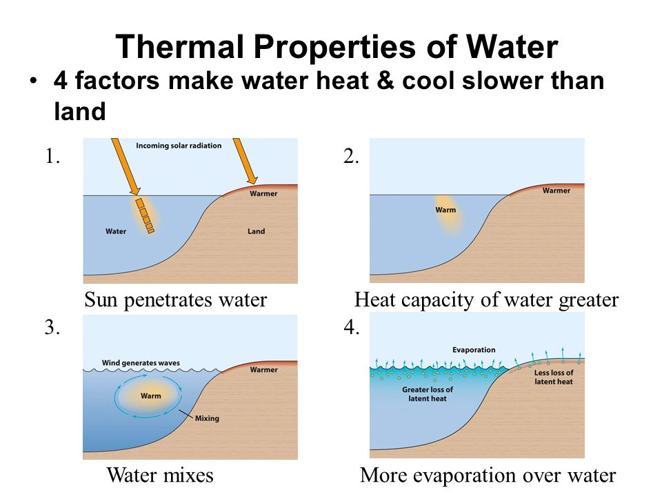Thermal Properties of Water