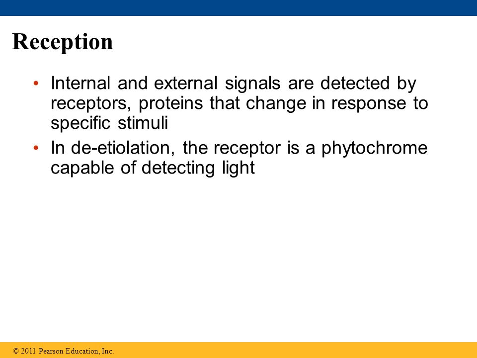 Reception Internal and external signals are detected by receptors, proteins that change in response to specific stimuli.