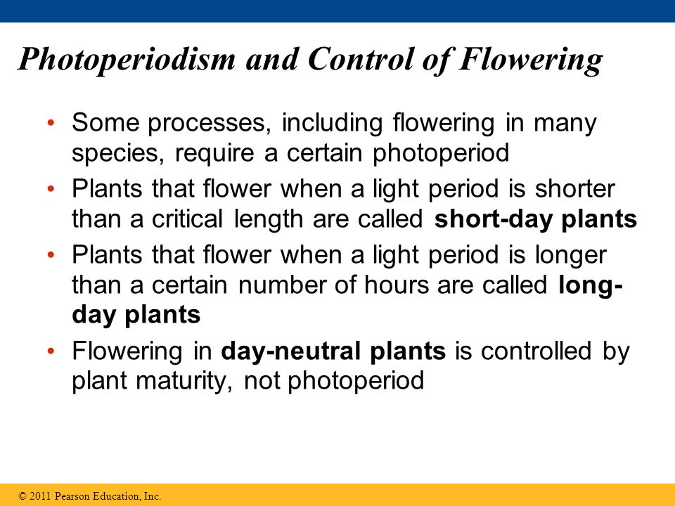 Photoperiodism and Control of Flowering