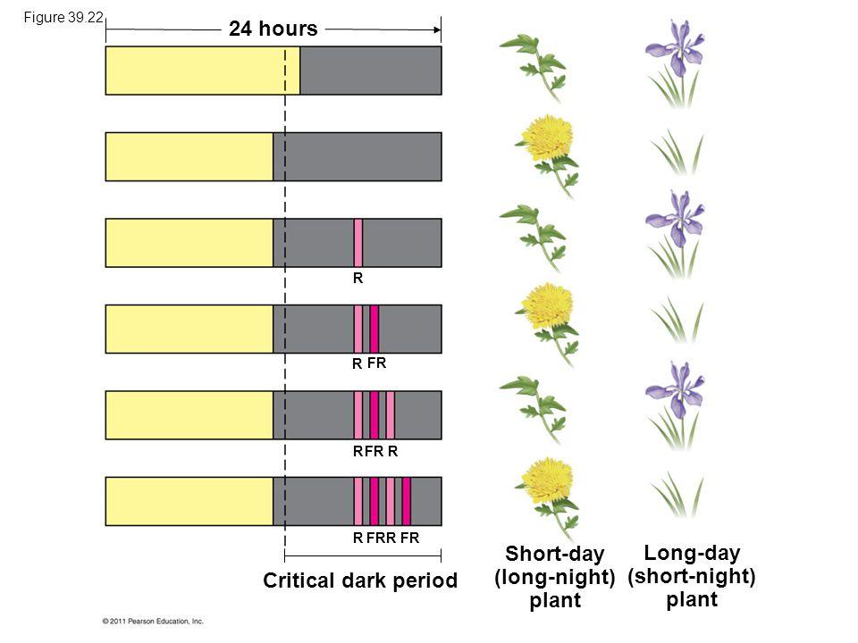 Short-day (long-night) plant Long-day (short-night) plant