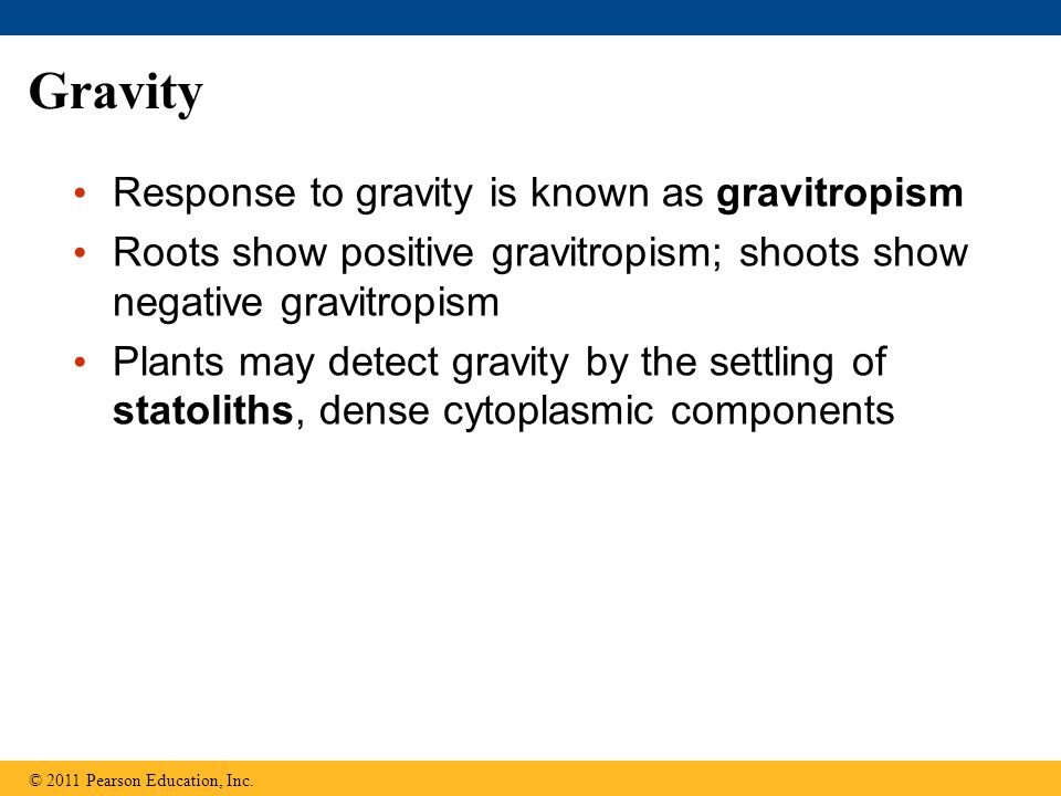 Gravity Response to gravity is known as gravitropism