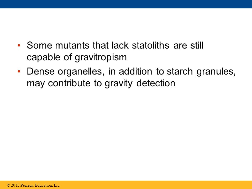 Some mutants that lack statoliths are still capable of gravitropism