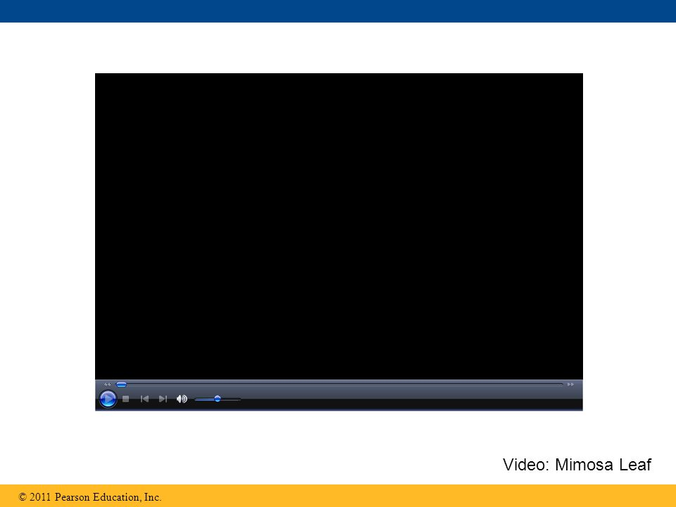 Video: Mimosa Leaf © 2011 Pearson Education, Inc.