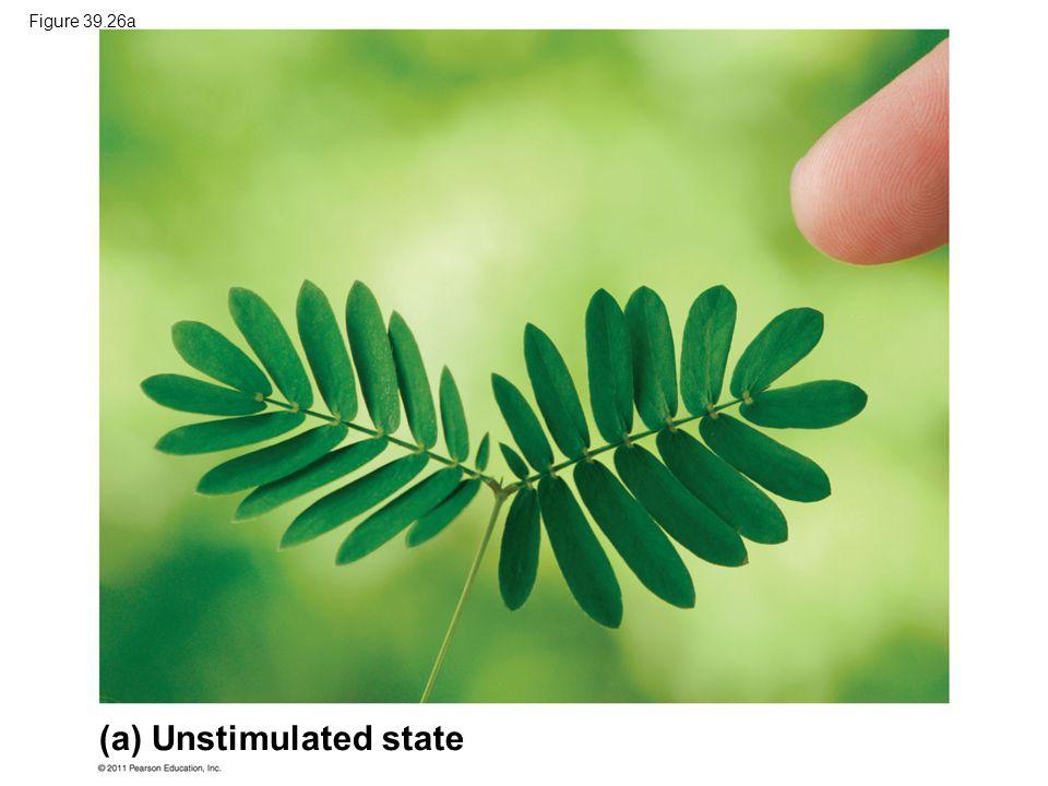 (a) Unstimulated state