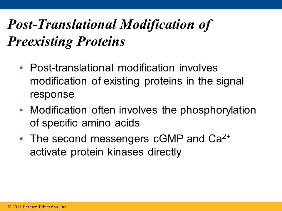 Post-Translational Modification of Preexisting Proteins