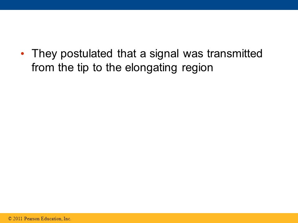 They postulated that a signal was transmitted from the tip to the elongating region