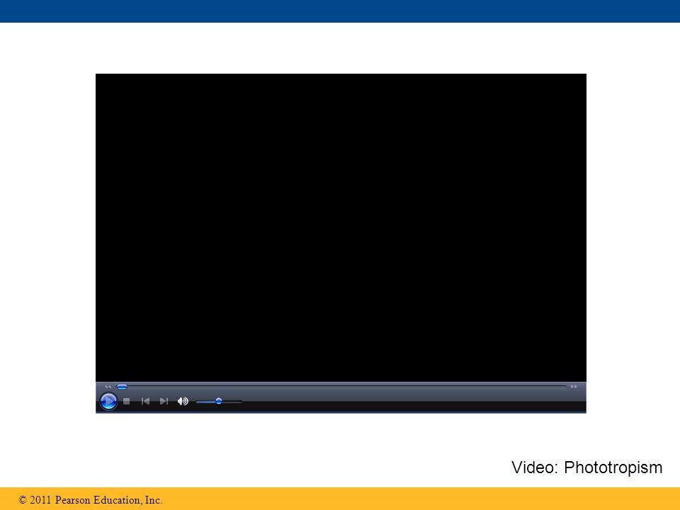 Video: Phototropism © 2011 Pearson Education, Inc.