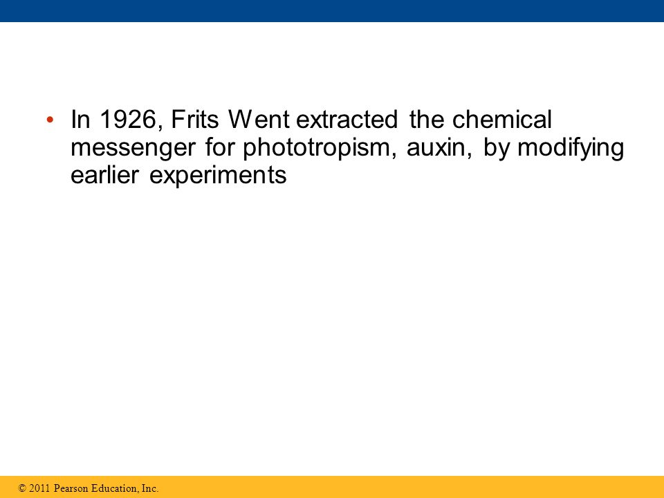 In 1926, Frits Went extracted the chemical messenger for phototropism, auxin, by modifying earlier experiments