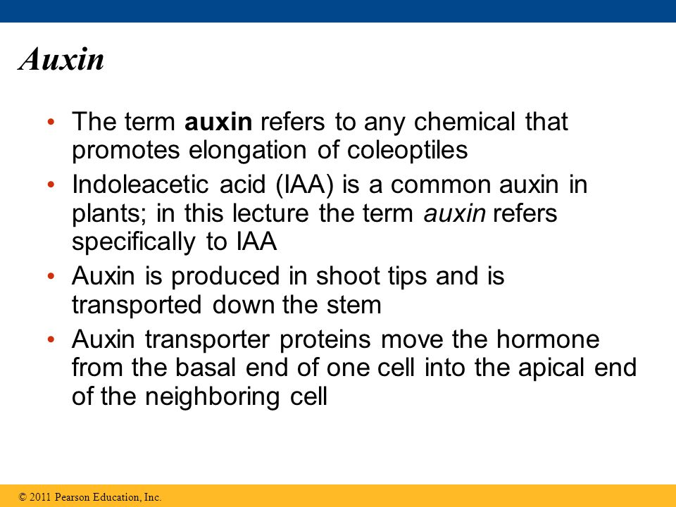 Auxin The term auxin refers to any chemical that promotes elongation of coleoptiles.