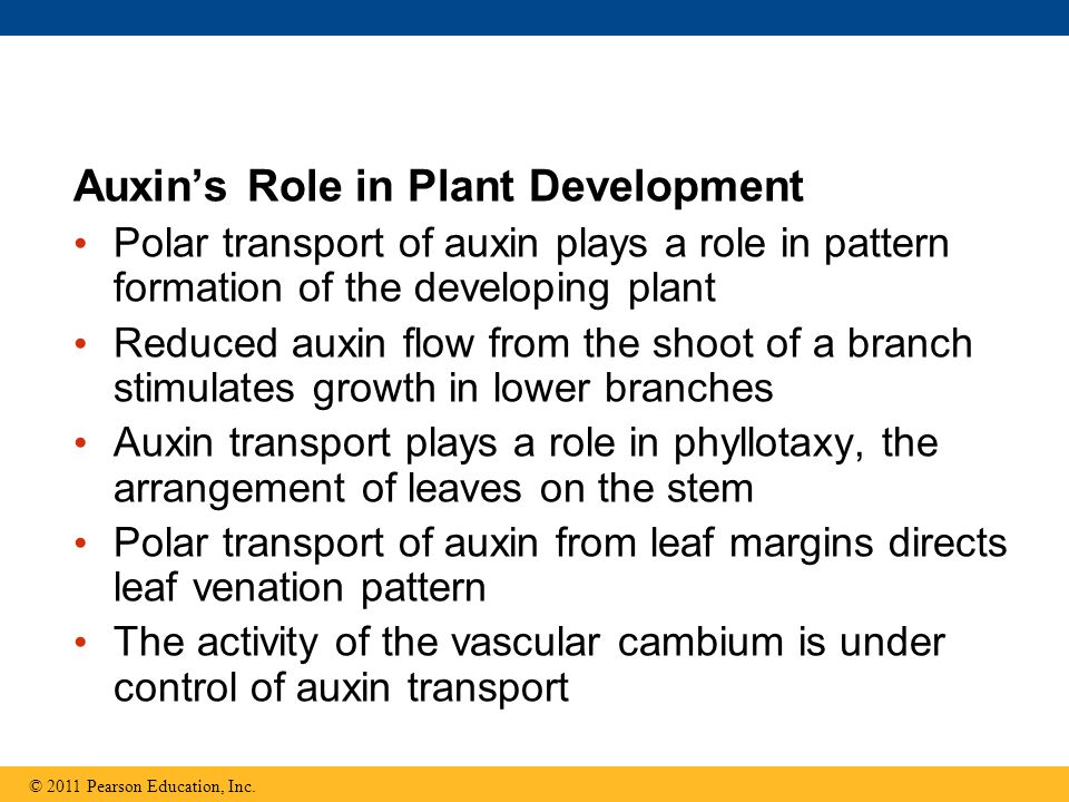 Auxin's Role in Plant Development