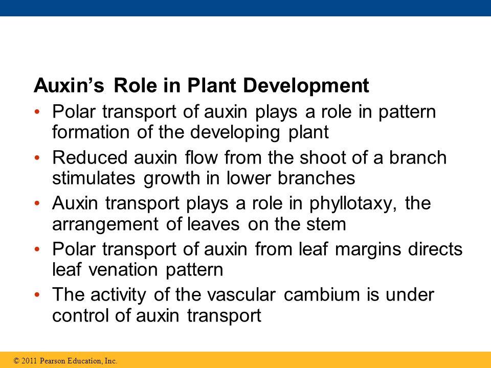 Auxin's Role in Plant Development