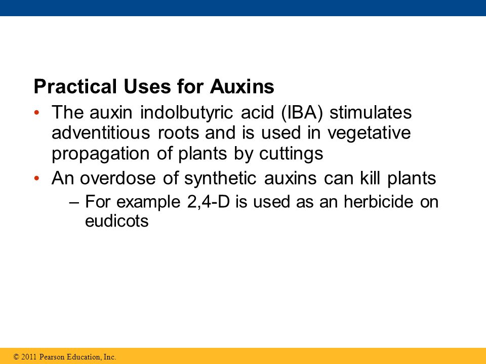 Practical Uses for Auxins
