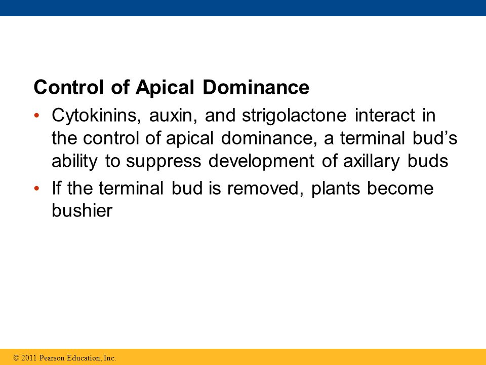 Control of Apical Dominance
