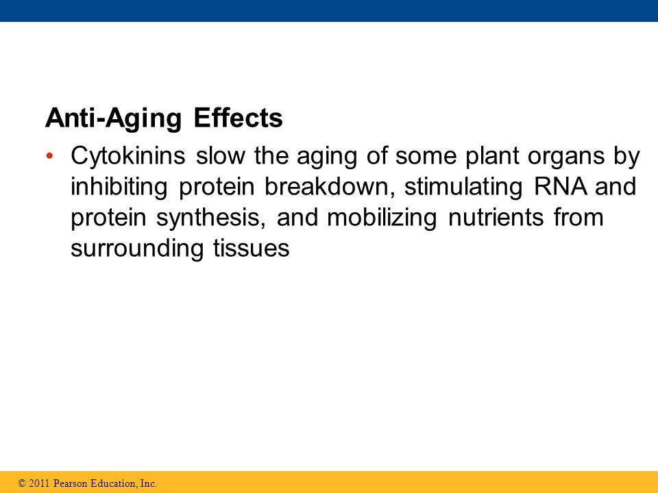 Anti-Aging Effects