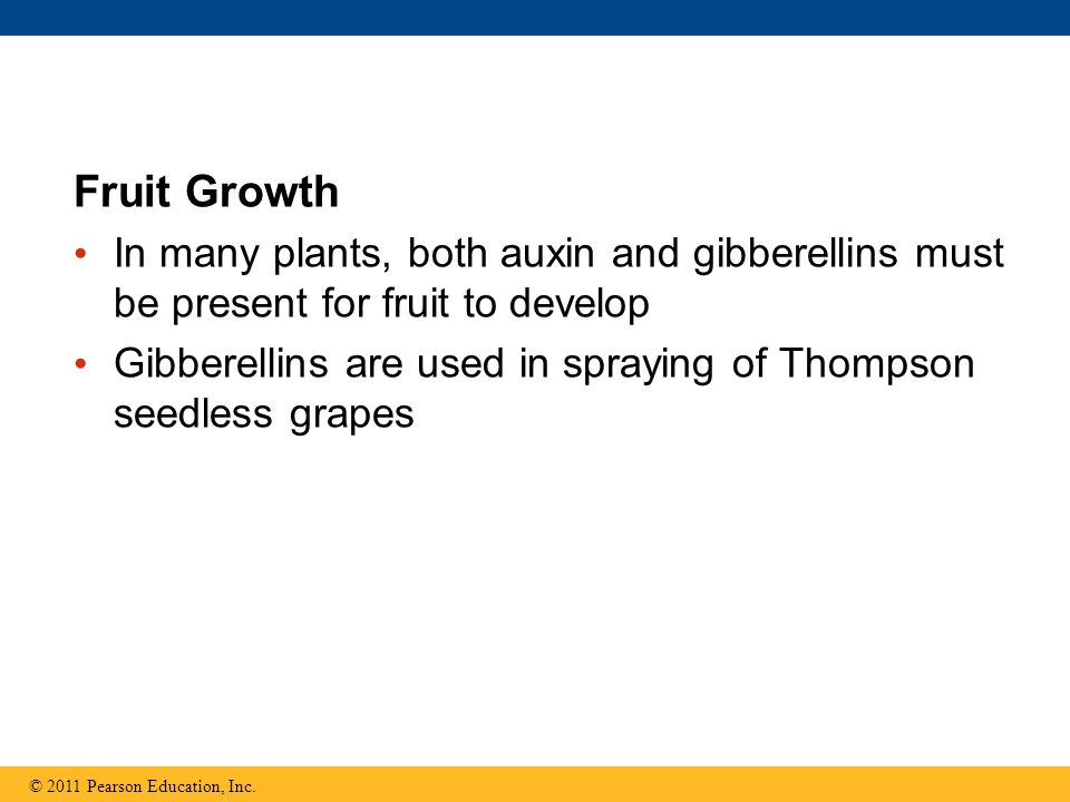Fruit Growth In many plants, both auxin and gibberellins must be present for fruit to develop.