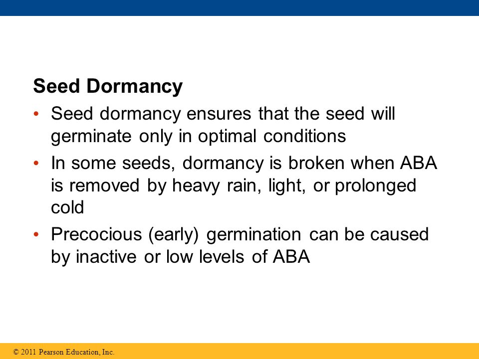 Seed Dormancy Seed dormancy ensures that the seed will germinate only in optimal conditions.