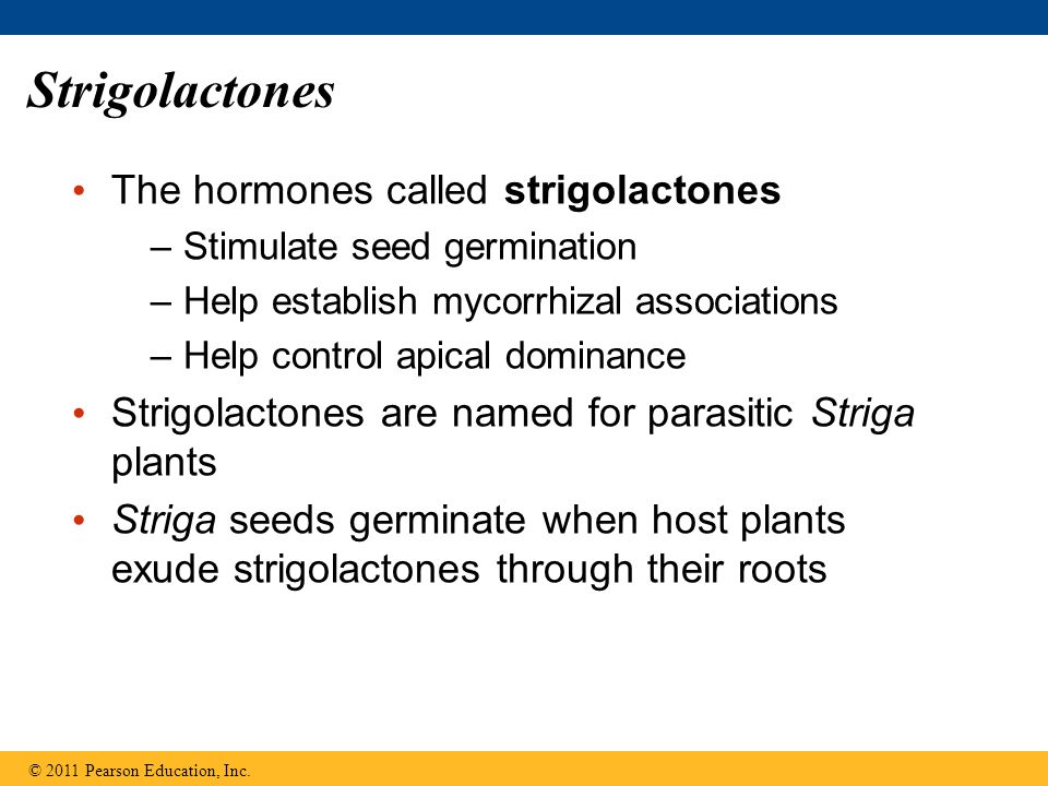 Strigolactones The hormones called strigolactones