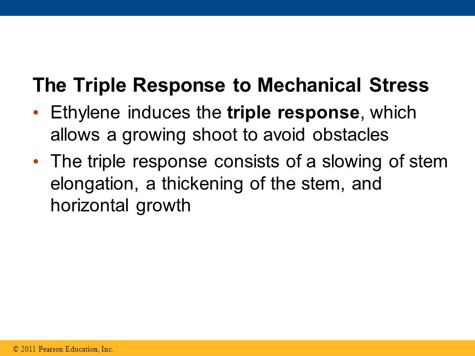 The Triple Response to Mechanical Stress