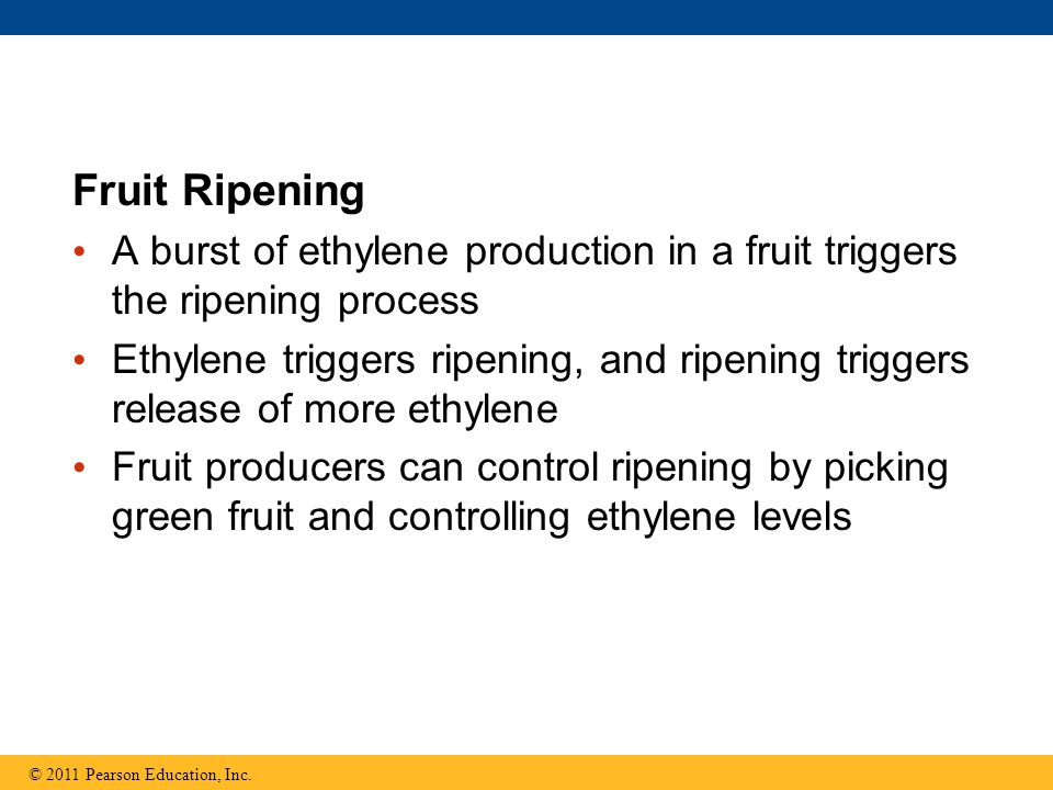 Fruit Ripening A burst of ethylene production in a fruit triggers the ripening process.