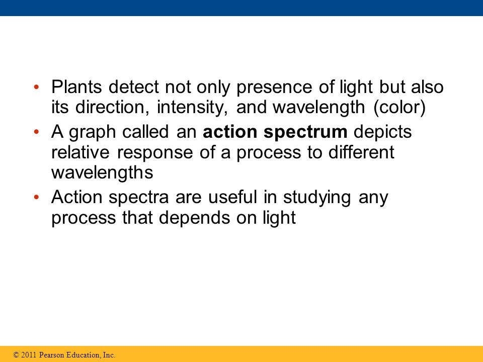 Plants detect not only presence of light but also its direction, intensity, and wavelength (color)