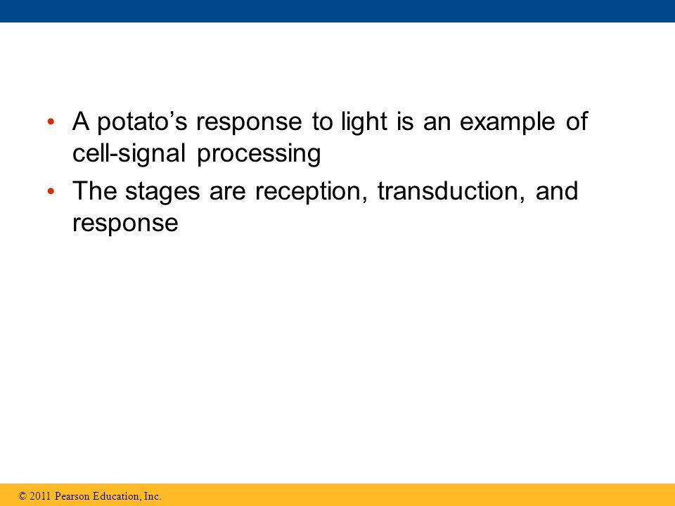 A potato's response to light is an example of cell-signal processing