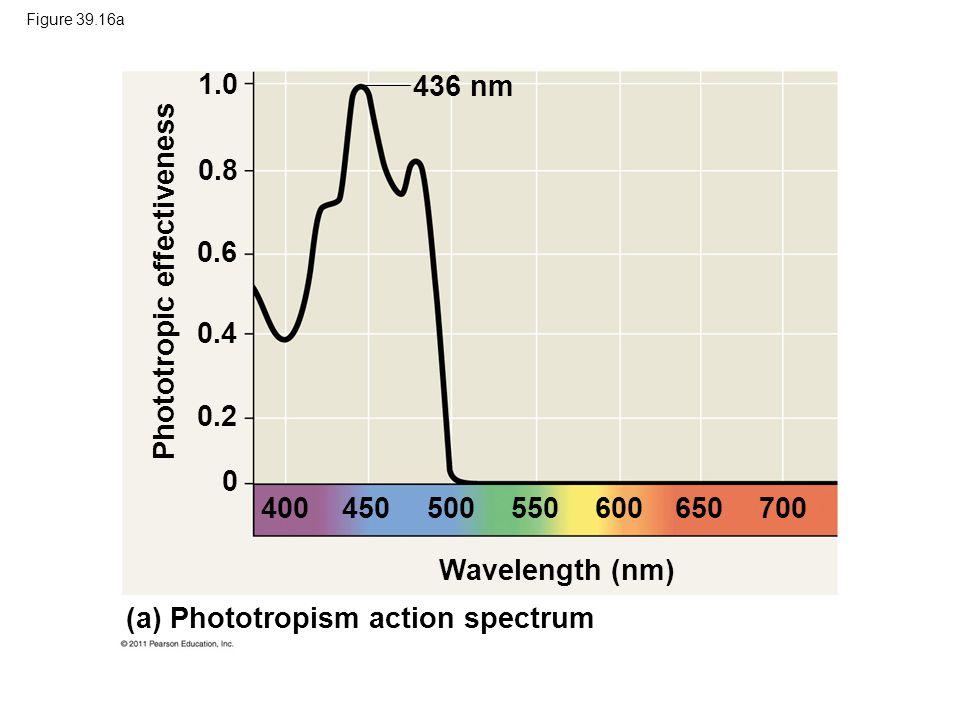 Phototropic effectiveness